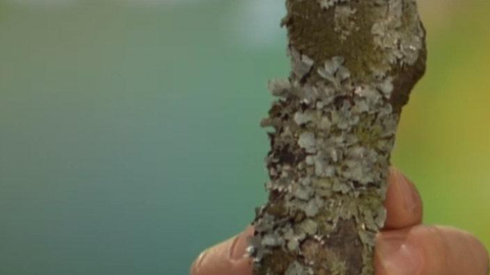 Pflanzen: Algen - Pflanzen - Natur - Planet Wissen