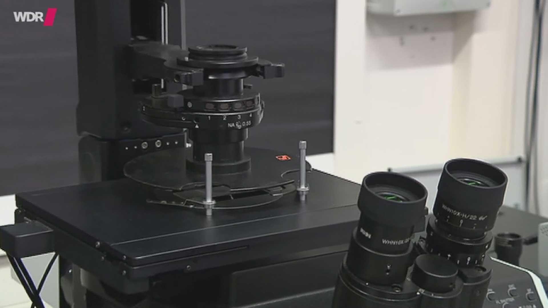 Dauerpräparate zum mikroskopieren