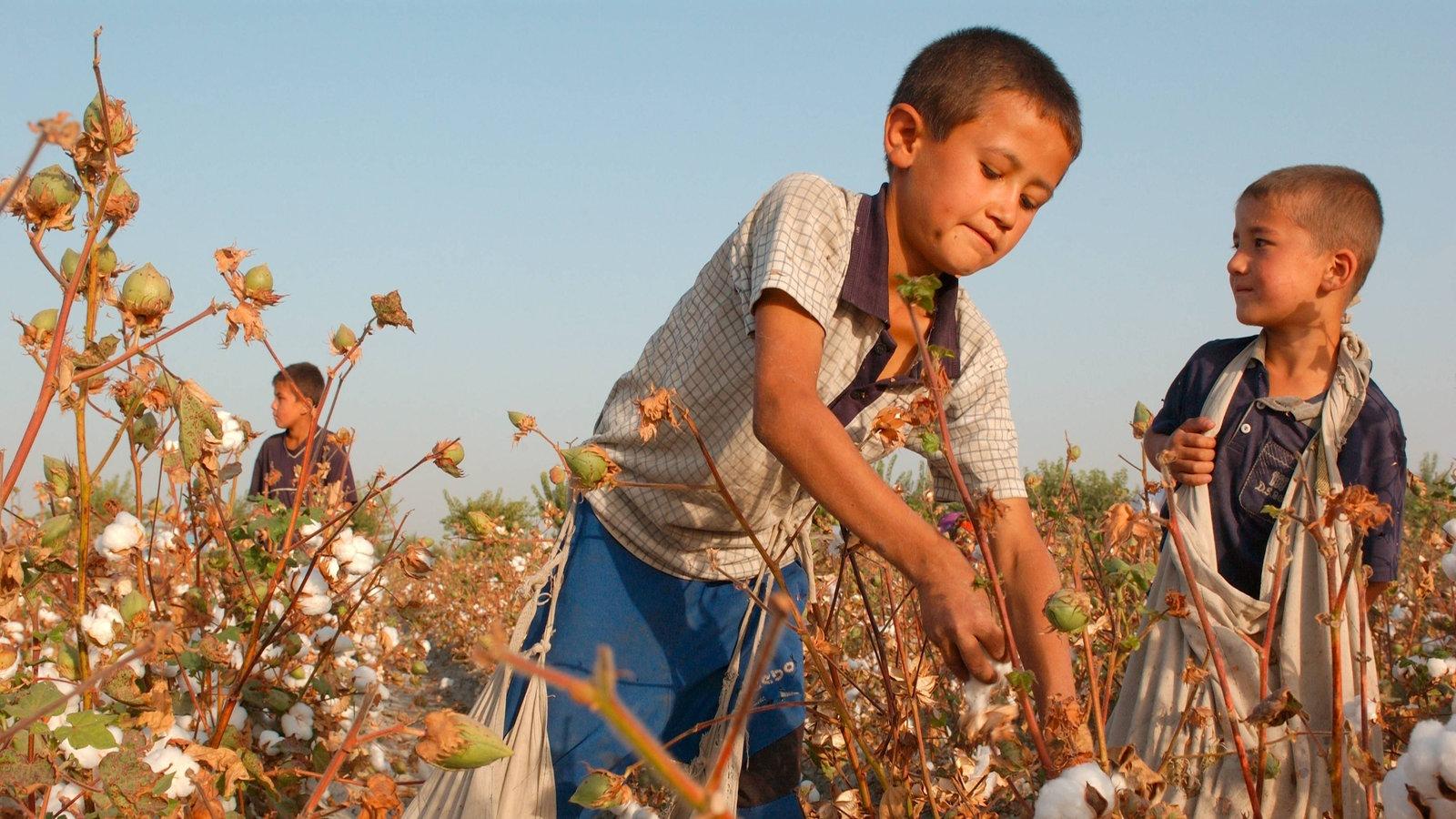 Planet Wissen Kinderarbeit