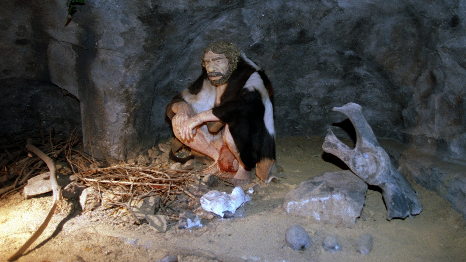 Was Sind Neandertaler