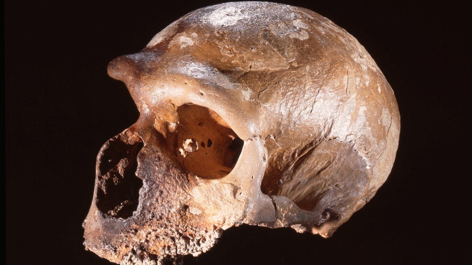 Urzeit: Neandertaler - Urzeit - Geschichte - Planet Wissen