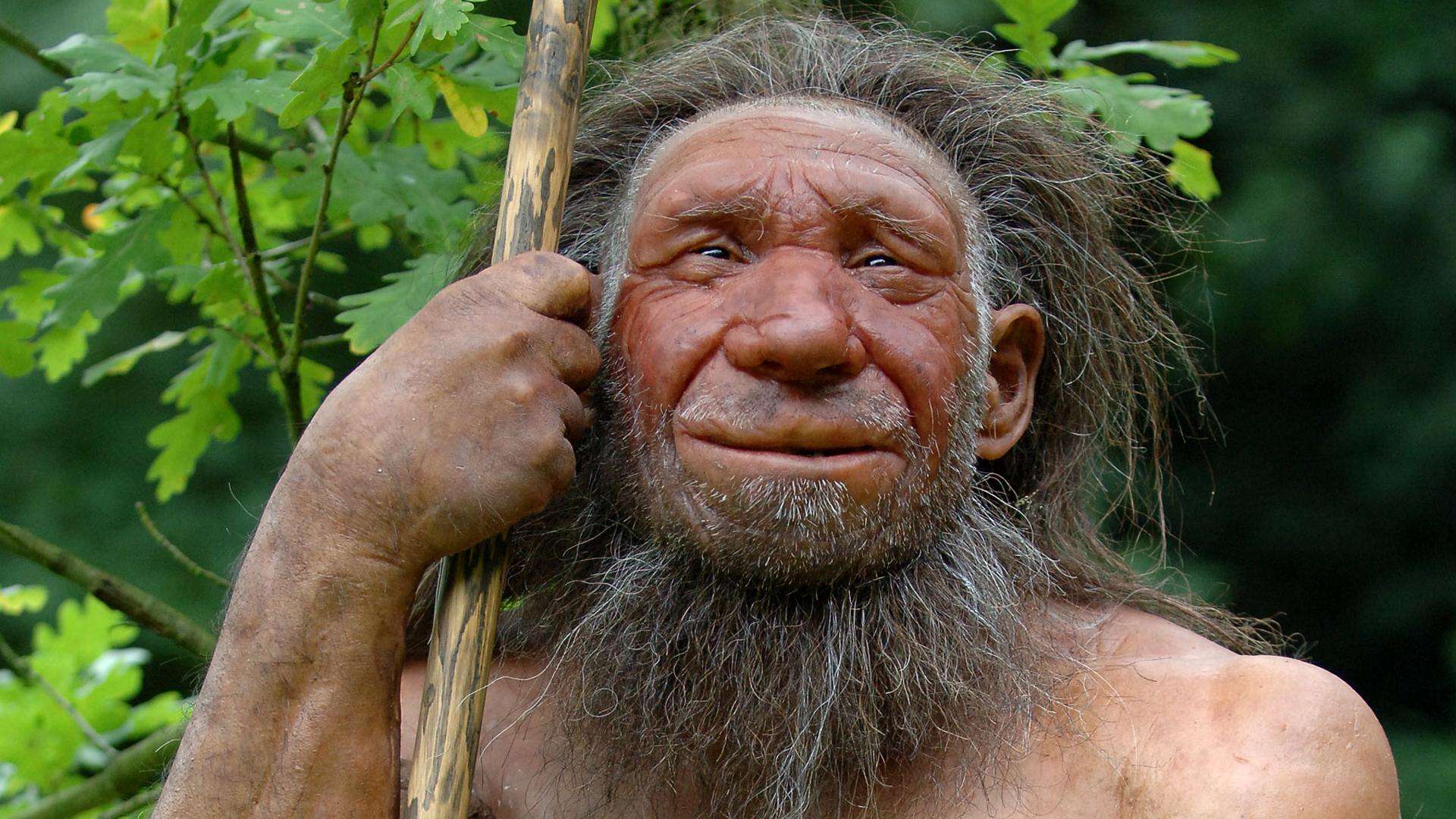 Homo Sapiens Und Neandertaler