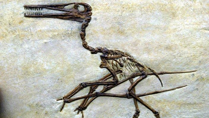 Dinosaurier: Waffen, Gru00f6u00dfe, Schnelligkeit - Urzeit ...