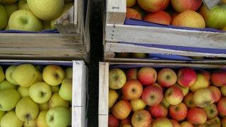 Aufsicht auf Obstkisten mit verschiedenen Apfelsorten.