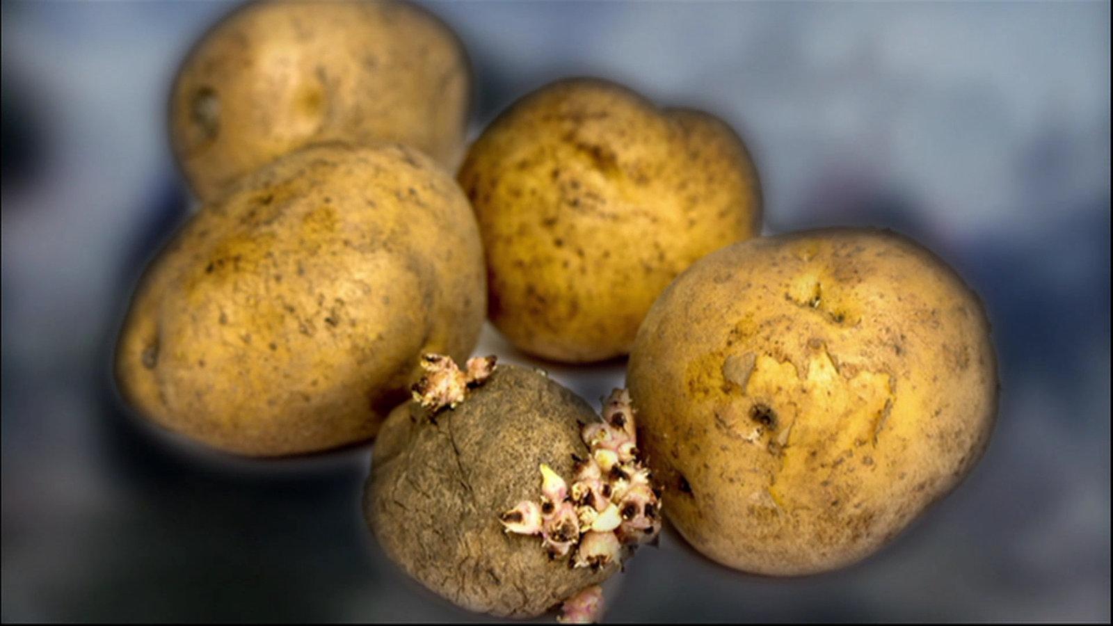Geschichte Der Kartoffel
