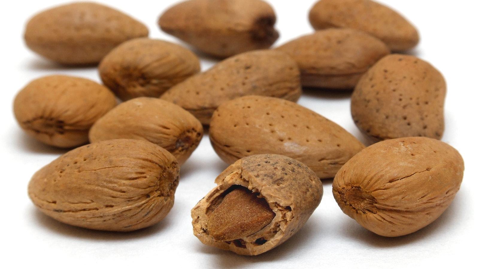 Nusse Nussarten Nusse Lebensmittel Gesellschaft Planet Wissen