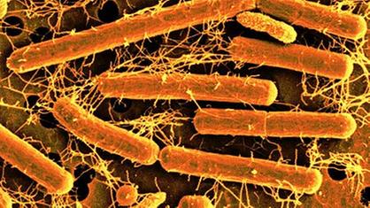 Milchsäure Bakterien