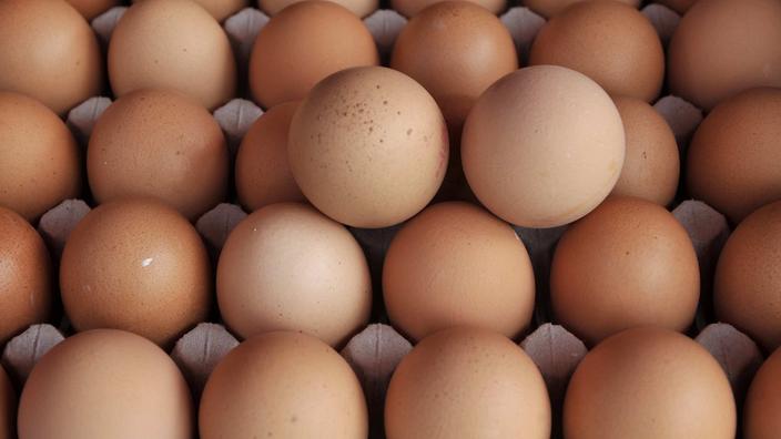 Discounter nehmen Eier unter Fipronil-Verdacht aus dem Regal