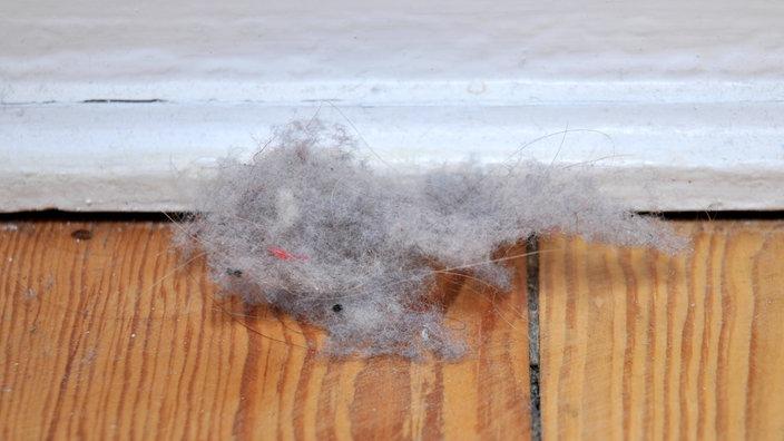 Staub: Staub vermeiden und entfernen - Sauberkeit - Gesellschaft ...