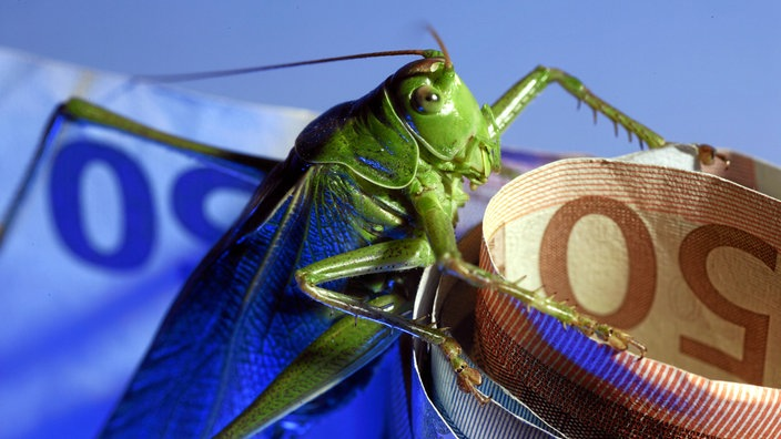 grüne Heuschrecke knabbert an Geldbündel.