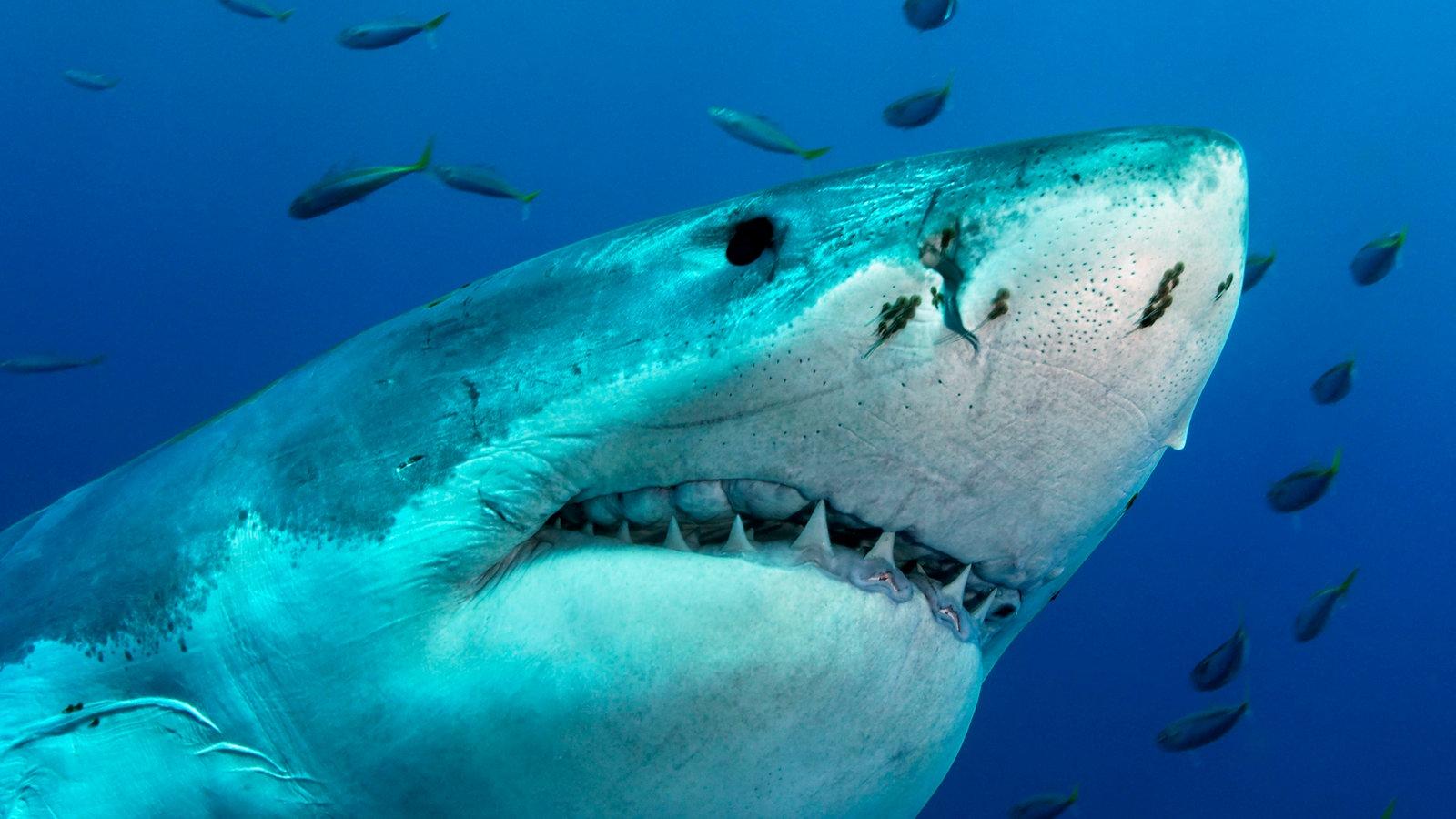 Haie Fische