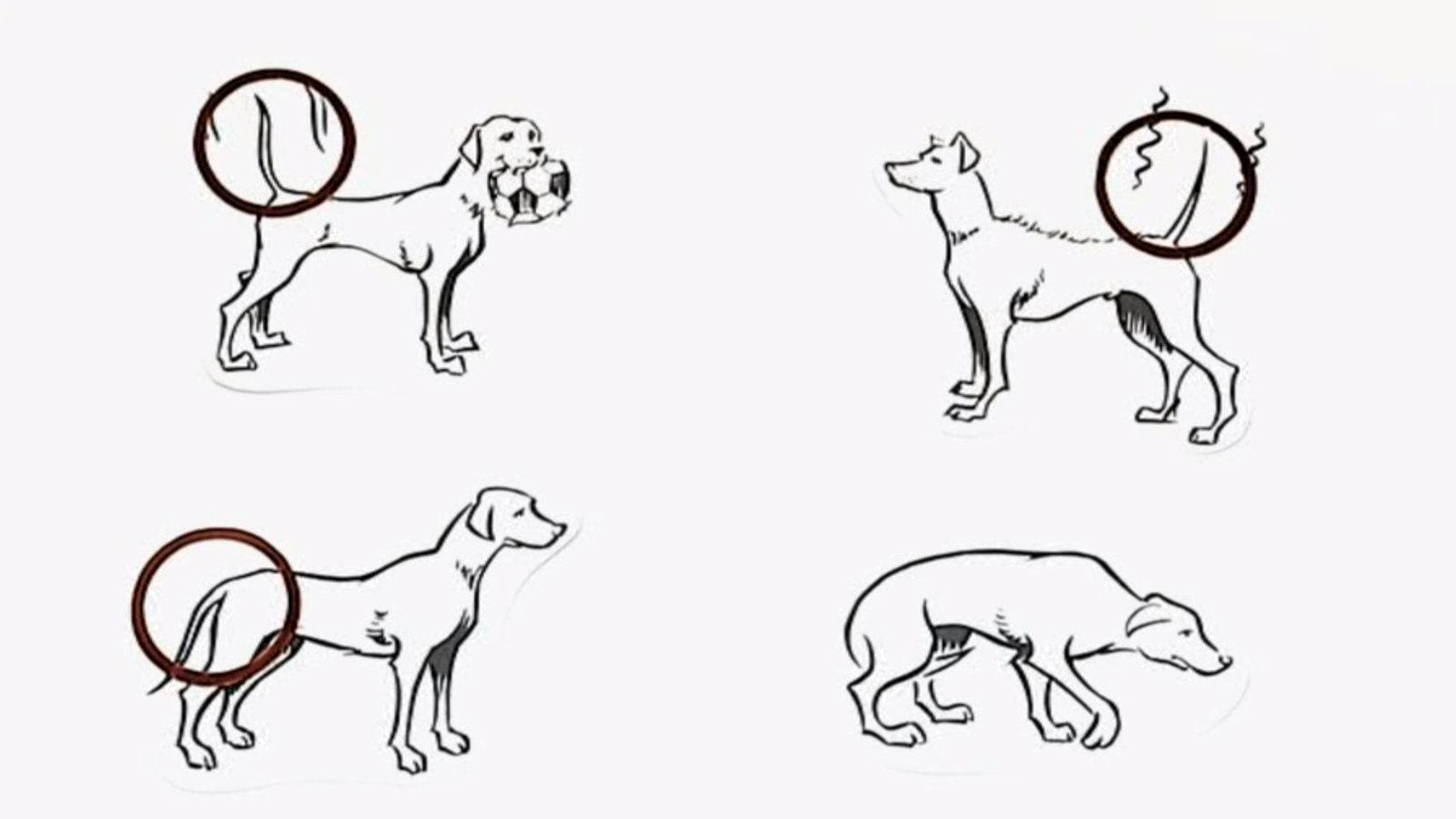 Die Körpersprache der Hunde - Mediathek - WDR