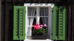 Fenster mit geöffneten Läden und Geranien in einem Blumenkasten