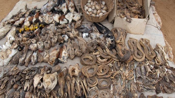 Bedeutung ihre zeichen voodoo und Religiöse Symbole