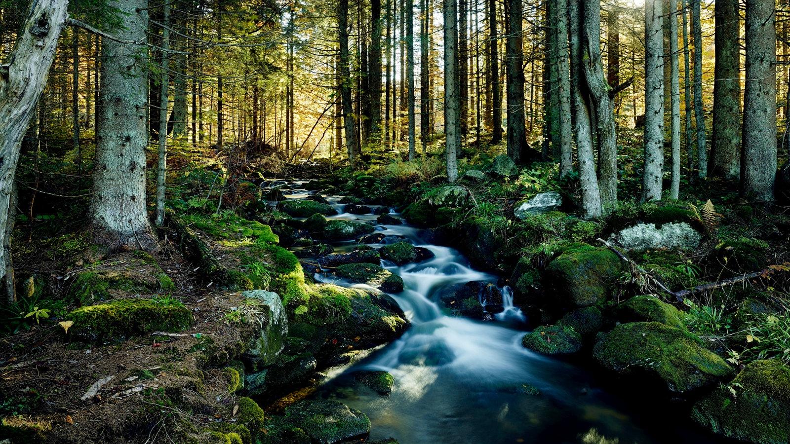 bayerischer wald nationalpark mittelgebirge kultur planet wissen. Black Bedroom Furniture Sets. Home Design Ideas