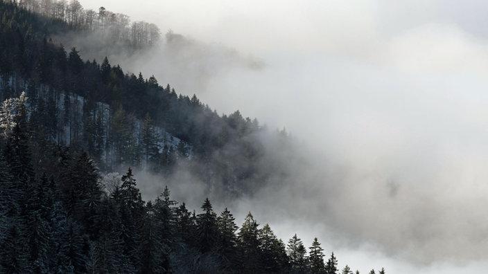 Planet Schwarzwald schwarzwald mittelgebirge kultur planet wissen