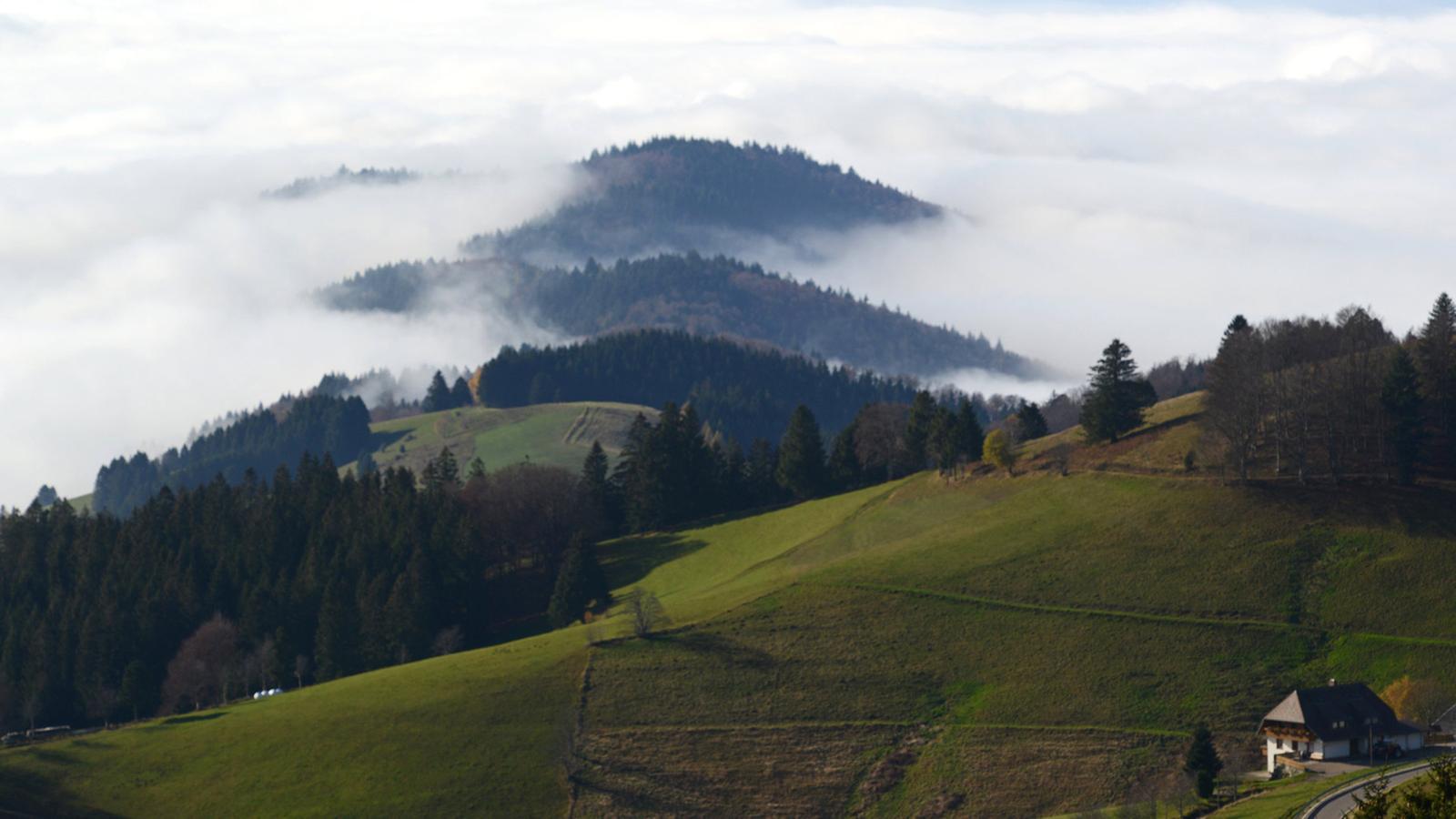 Enkle løyper i Schwarzwald
