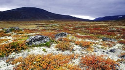 Tundra im Dovrefjell National Park in Norwegen.