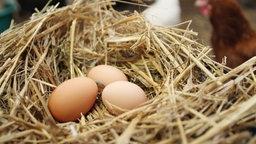 Im Vordergrund ein Nest mit drei Hühnereiern, dahinter unscharf zwei Hühner