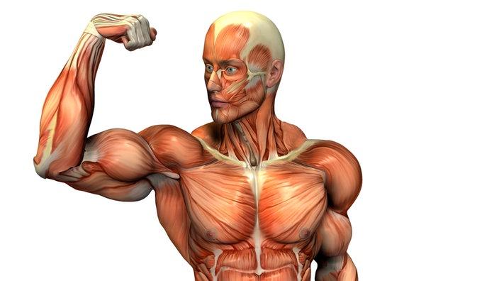 Anatomie des Menschen: Bewegung - Bewegung - Natur - Planet Wissen