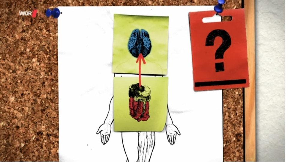Anatomie des Menschen: Darm - Darm - Natur - Planet Wissen