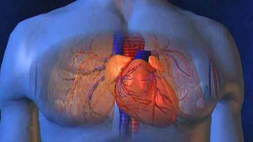 Das Herz - wie funktioniert es? (1\'57\