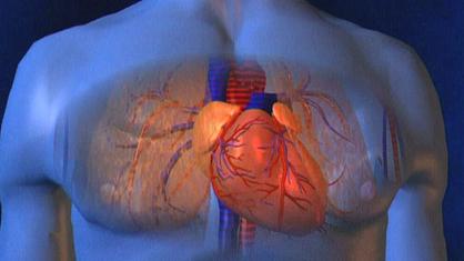 Körper frau wo das herz liegt im Herz
