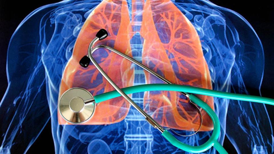 Anatomie des Menschen: Lunge - Lunge - Natur - Planet Wissen