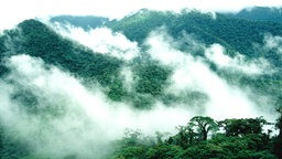 Mit Wald überzogene Berge, über die ein Schleier aus Nebel liegt