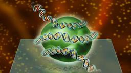 Zeichnung eines Histonkomplexes, um das sich eine DNS-Doppelhelix windet.