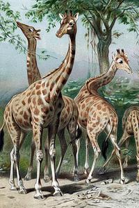 Zeichnung von verschieden großen Giraffen vor einem Baum.