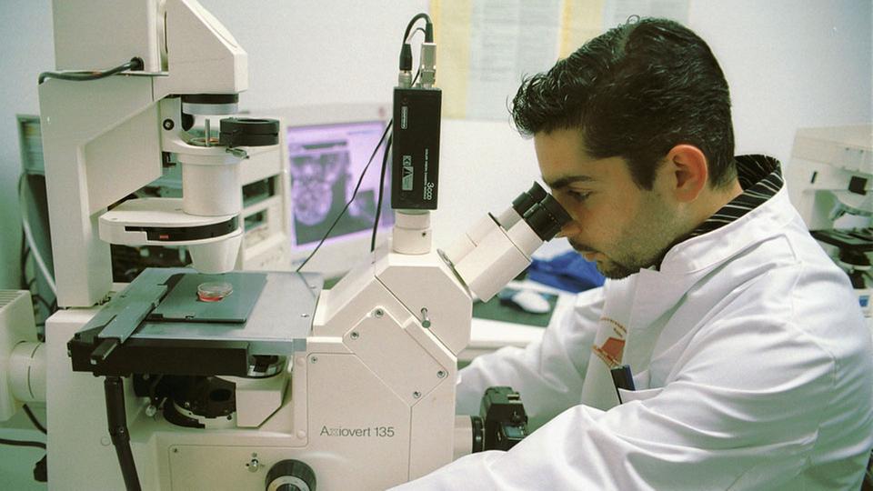 Adulte Stammzellen vs. embryonale Stammzellen