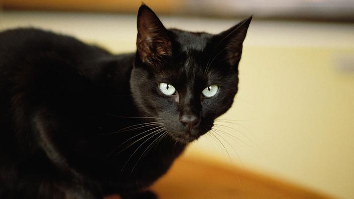 Katze Vor Dem Fernseher Bild: Haustiere: Katzen