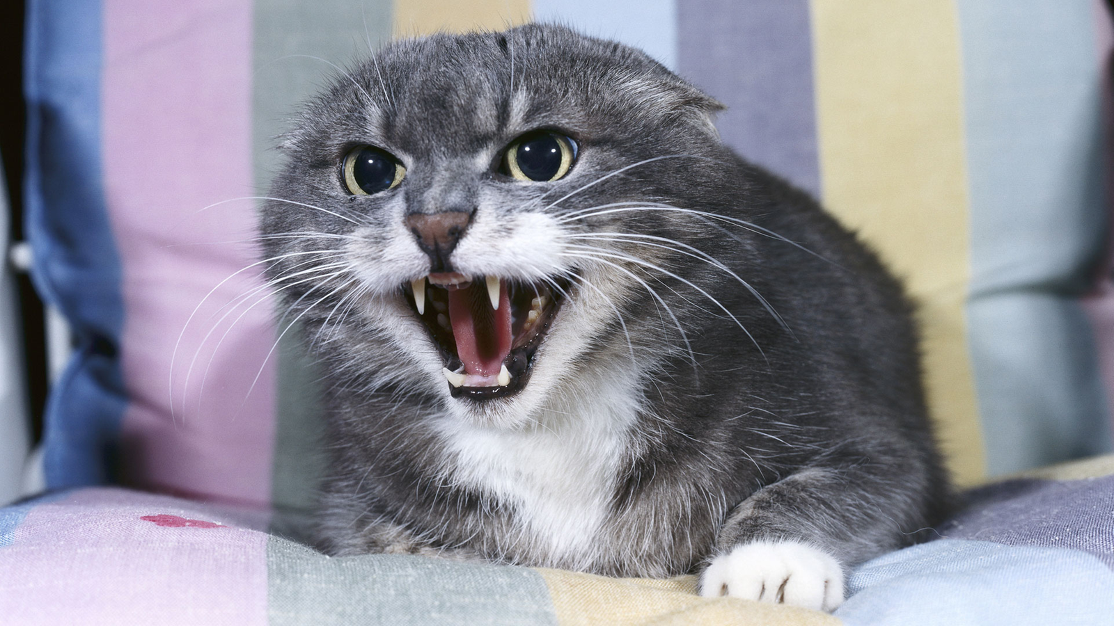 Katzen: Die Sprache der Katzen - Katzen - Haustiere