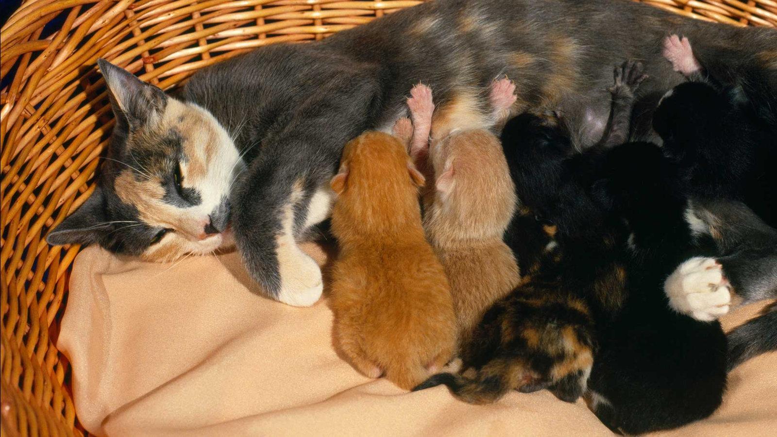 von der babykatze zum stubentiger entwicklung der katze katzen haustiere natur planet. Black Bedroom Furniture Sets. Home Design Ideas