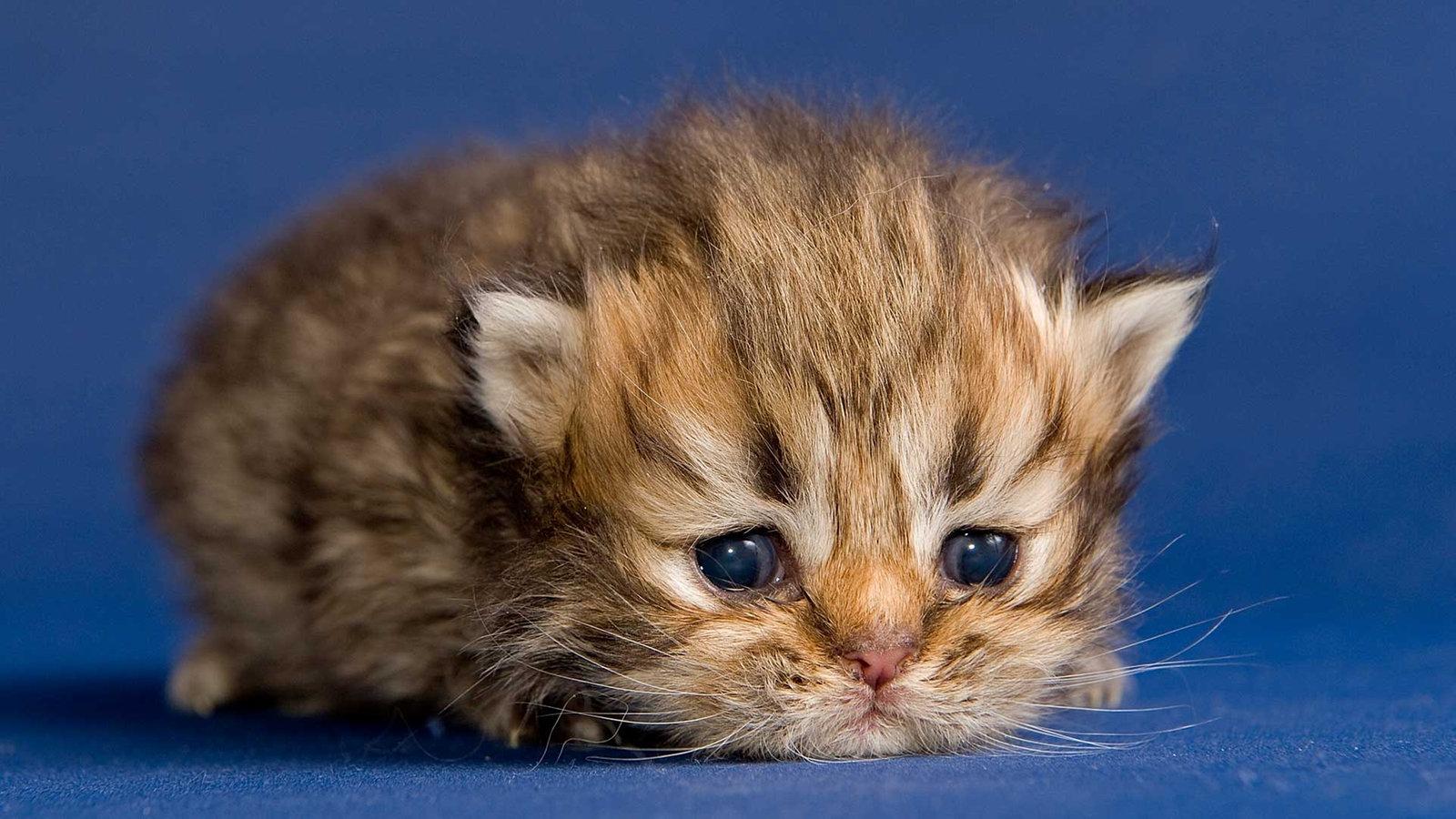 Von Der Babykatze Zum Stubentiger Entwicklung Der Katze Katzen