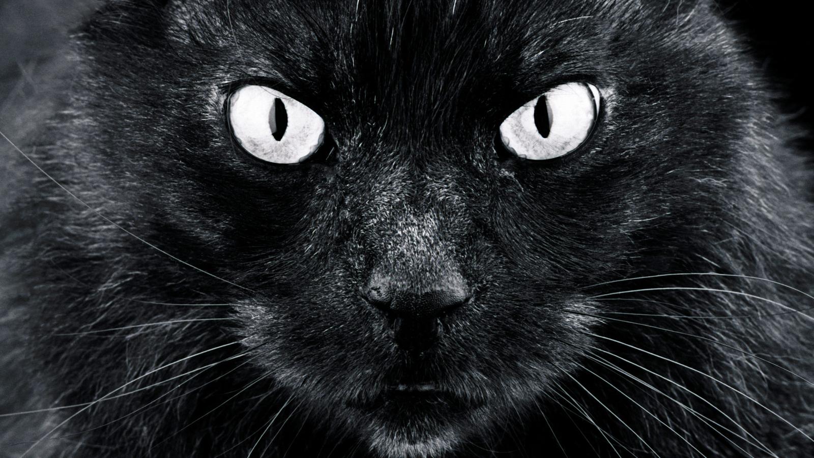 Katzen: Wissensfragen - Katzen - Haustiere - Natur
