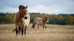 Haustiere Pferde Pferde Haustiere Natur Planet Wissen