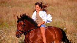 pferde: wie das pferd ein mädchentier wurde - pferde