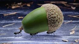 insekten und spinnentiere ameisen insekten und spinnentiere natur planet wissen. Black Bedroom Furniture Sets. Home Design Ideas