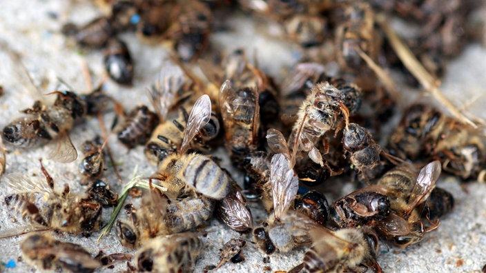 bienen bienensterben bienen insekten und spinnentiere natur planet wissen. Black Bedroom Furniture Sets. Home Design Ideas