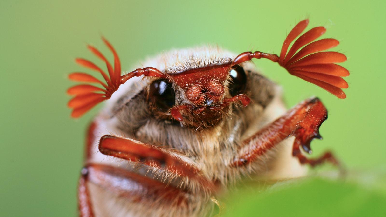 k fer die sinnesorgane der k fer k fer insekten und spinnentiere natur planet wissen. Black Bedroom Furniture Sets. Home Design Ideas