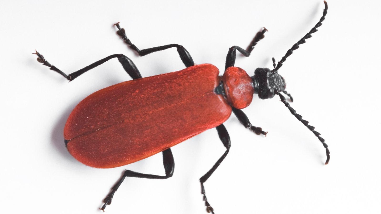 k fer besondere k fer k fer insekten und spinnentiere natur planet wissen. Black Bedroom Furniture Sets. Home Design Ideas