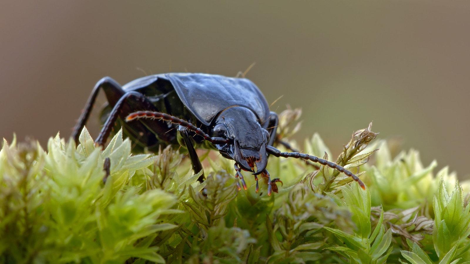 insekten und spinnentiere k fer k fer insekten und. Black Bedroom Furniture Sets. Home Design Ideas