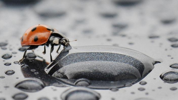 Kafer Nutzlinge Und Schadlinge Kafer Insekten Und Spinnentiere