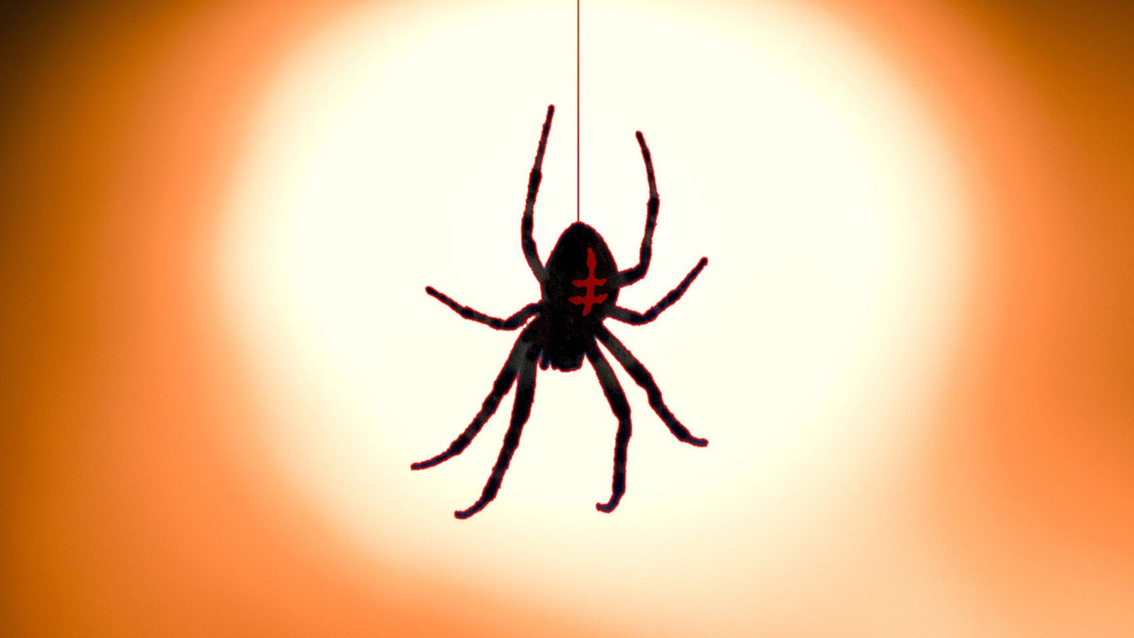 az insekten und spinnentiere insekten und spinnentiere