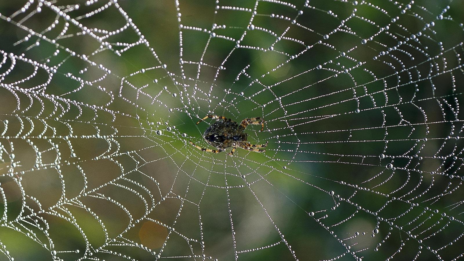 insekten und spinnentiere spinnen spinnen insekten. Black Bedroom Furniture Sets. Home Design Ideas
