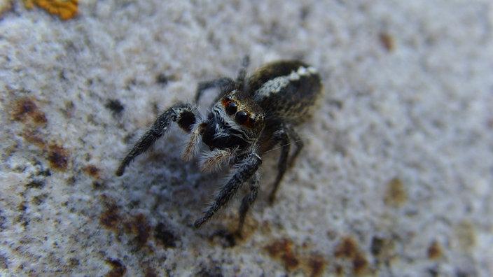 gift gegen spinnen spinnen vertreiben bek mpfen hausmittel gegen spinnen in haus wohnung. Black Bedroom Furniture Sets. Home Design Ideas