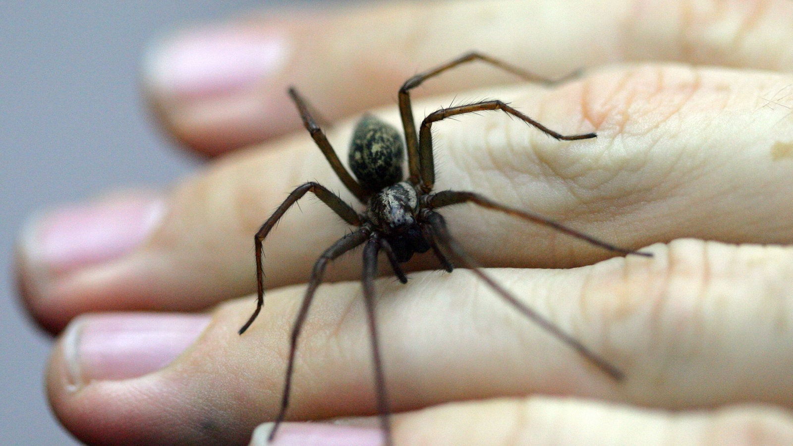 Ekelhafte Spinnen