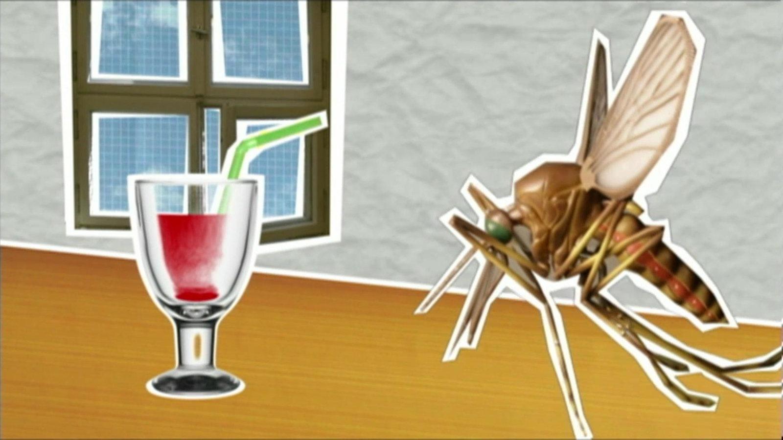 warum stechen m cken planet wissen. Black Bedroom Furniture Sets. Home Design Ideas